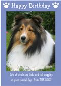 "Shetland Sheepdog-Happy Birthday - ""From The Dog"" Theme"